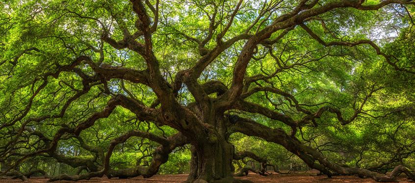 樫の木を植える最も良い時期は20年前だった。次にいい時期は今である。