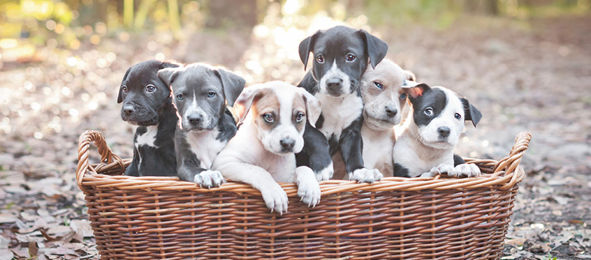 The hidden costs and risks of free puppies (and open source)