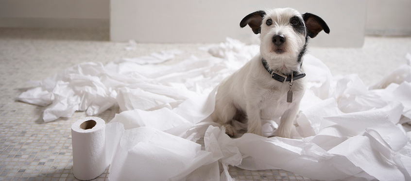 Just like puppies need training, open source needs to be monitored for vulnerabilities.