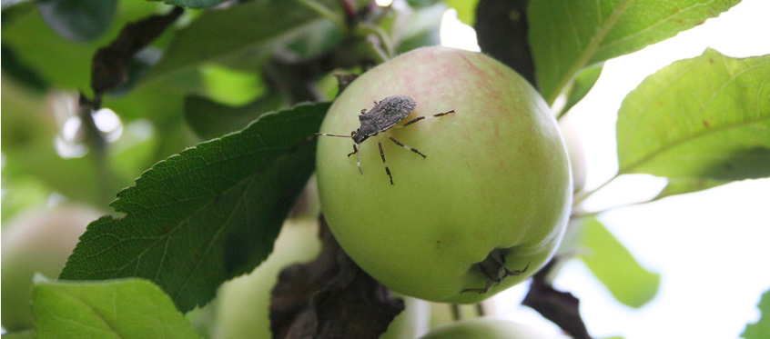 Apple's bug bounty program has payouts up to $1 million and is open to all researchers.
