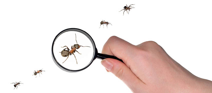 Software composition analysis helps developers uncover known bugs and vulnerabilities in open source components.