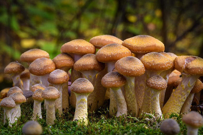 In a complex environment, software vulnerabilities spring up like fungi.